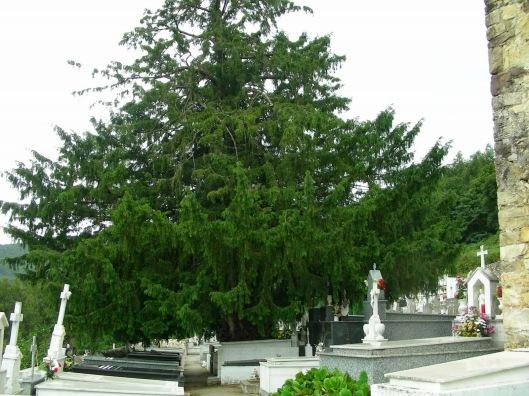 Salas (Cementerio de San Martín)2