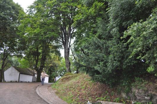 SAN ROQUE (Tineo)
