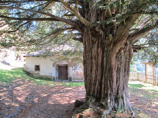 Santa Coloma (Allande)